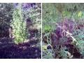 За выращивание конопли житель Зугрэса привлечен к ответственности