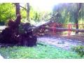 Стихия, разразившаяся над Харцызском, повалила не один десяток деревьев